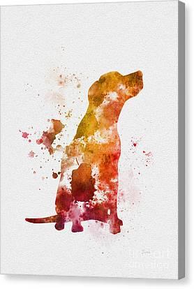 Popular Canvas Print - Labrador by Rebecca Jenkins