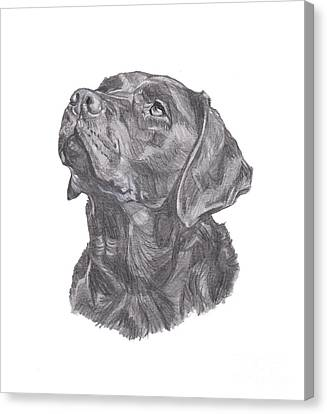 Labrador Retriever Charcoal Drawing Canvas Print by I Am Lalanny