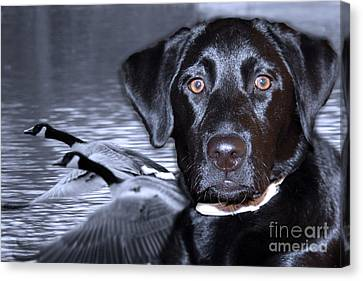 Labrador Retriever Thoughts  Canvas Print by Cathy  Beharriell