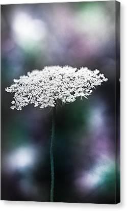 Lace Canvas Print by Shane Holsclaw