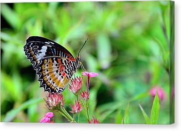 Canvas Print featuring the photograph Lace Wing Butterfly by Corinne Rhode