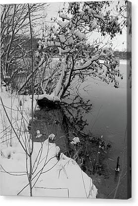 Canvas Print featuring the photograph Laden With Winter by Scott Kingery