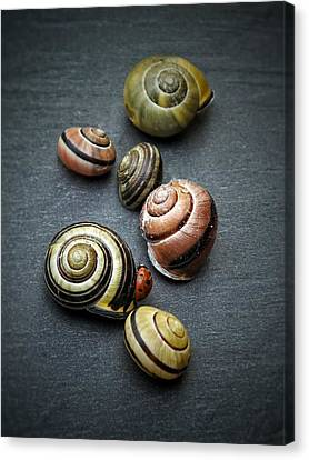 Lady Bug And Snail Shells 1 Canvas Print