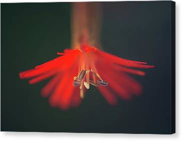 Canvas Print featuring the photograph Lady In Red by Alexander Kunz