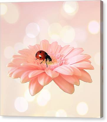 Lady On Pink Canvas Print by Sharon Lisa Clarke