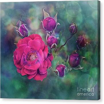 Lady Rose Canvas Print by Agnieszka Mlicka