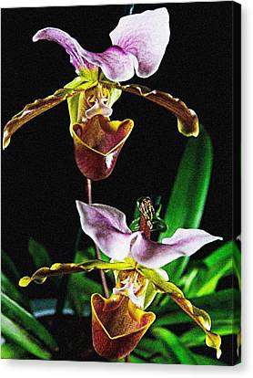 Canvas Print featuring the photograph Lady Slipper Orchid by Elf Evans