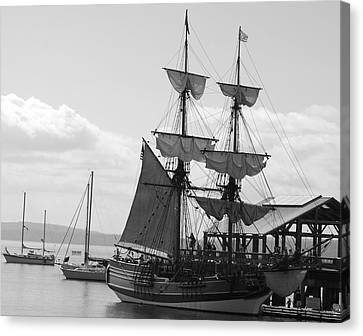 Lady Washington Canvas Print by Sonja Anderson