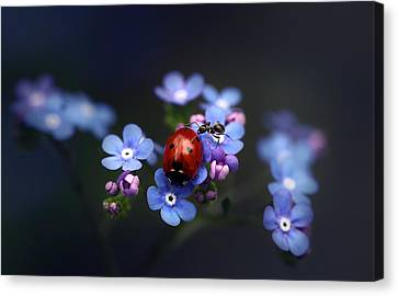 Ladybird And Ant Canvas Print by Ellen van Deelen