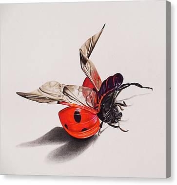 Ladybird Canvas Print by Biophilic Art