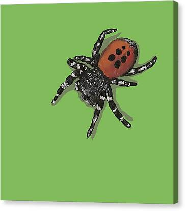 Ladybird Spider Canvas Print by Jude Labuszewski
