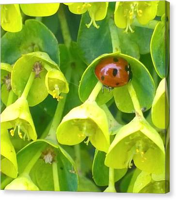 #ladybug Found Some Shelter From The Canvas Print by Shari Warren