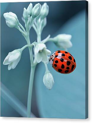 Canvas Print featuring the photograph Ladybug by Mark Fuller