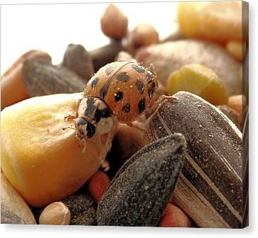 Ladybug On The Run Canvas Print