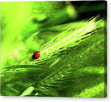 Canvas Print featuring the digital art Ladybug by Timothy Bulone
