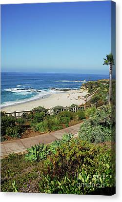 Laguna Afternoon Canvas Print by Timothy OLeary