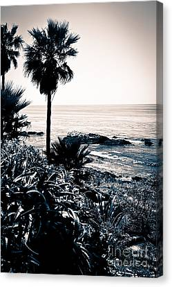 Laguna Beach California Black And White Canvas Print by Paul Velgos