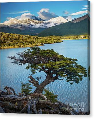 Andes Canvas Print - Laguna Capri Tree by Inge Johnsson