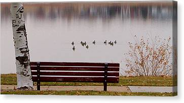 Lake Bench Canvas Print by James BO  Insogna