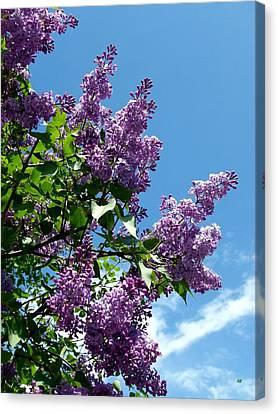 Lake Country Lilacs Canvas Print