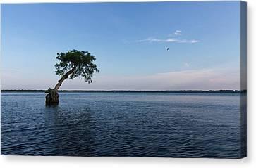 Lake Disston Cypress #2 Canvas Print by Paul Rebmann