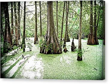 Lake Martin Swamp Canvas Print by Scott Pellegrin