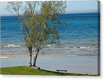 Canvas Print featuring the photograph Lake Michigan Birch Tree Bench by LeeAnn McLaneGoetz McLaneGoetzStudioLLCcom