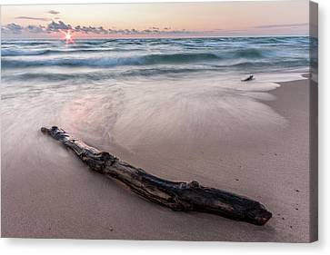 Canvas Print featuring the photograph Lake Michigan Driftwood by Adam Romanowicz