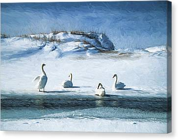 Lake Michigan Swans Canvas Print by Dennis Cox
