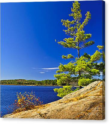 Lake Shore In Ontario Canvas Print by Elena Elisseeva