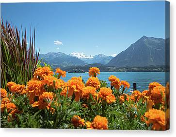 Lake Thunersee Canvas Print by Andy Myatt
