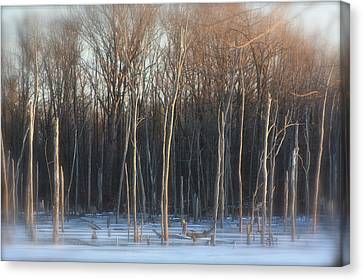 Lake Trees Of Winter Canvas Print by Bruce McEntyre