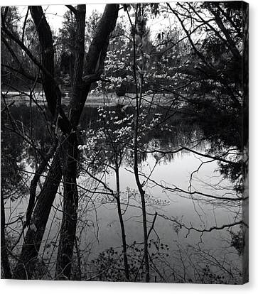 Lakeside Dogwood Reflection Canvas Print by Raven Moon