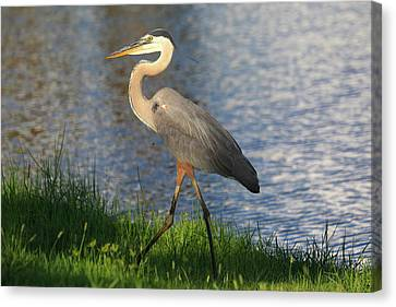 Canvas Print featuring the photograph Lakeside Stroll by Donna Kennedy