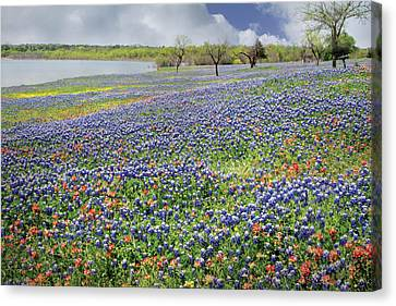 Canvas Print featuring the photograph Lakeside Texas Bluebonnets by David and Carol Kelly