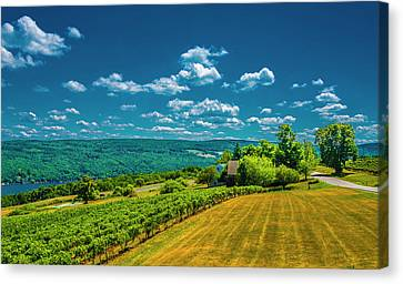 Lakeside Vineyard II Canvas Print by Steven Ainsworth