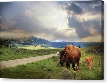 Lamar Valley Bison Canvas Print by Lori Deiter