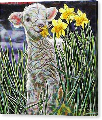 Lamb Collection Canvas Print by Marvin Blaine