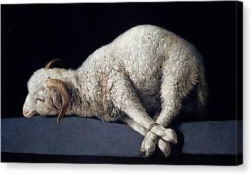 Agnus Canvas Print - Lamb Of God. Agnus Dei by Francisco de Zurbaran