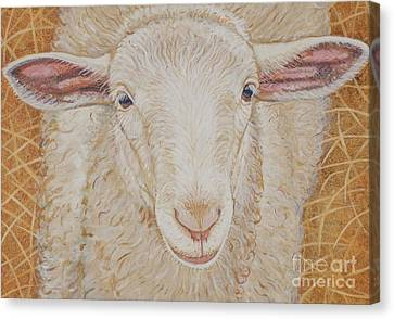 Lamb Of God Canvas Print by Christine Belt
