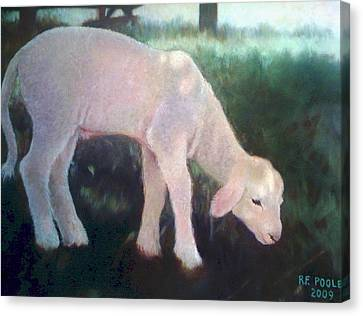 Lamb Of God Canvas Print by Rebecca Poole