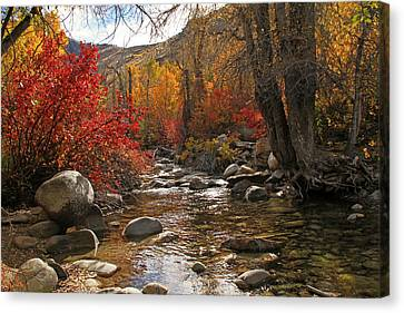 Lamoille Creek Canvas Print by Donna Kennedy
