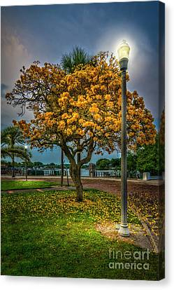 Night Lamp Canvas Print - Lamp And Tree by Marvin Spates