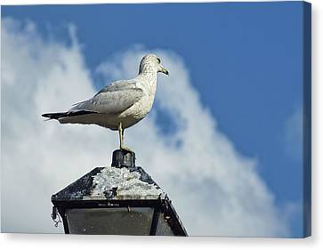 Canvas Print featuring the photograph Lamp Post Eddie by Jan Amiss Photography