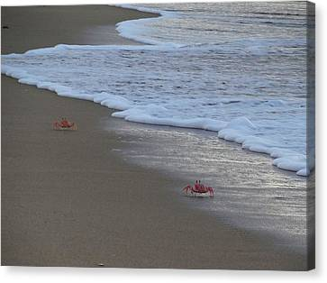 Lamu Island - Crabs Playing At Sunset 4 Canvas Print by Exploramum Exploramum