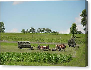 Lancaster County Pennslyvania  - The Amish Canvas Print by Bill Cannon