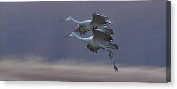 Canvas Print featuring the photograph Landing Gear Down by Shari Jardina