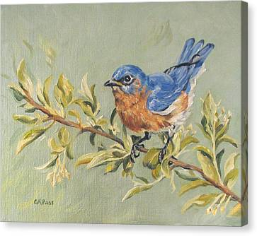 Landing In Honeysuckle Canvas Print by Cheryl Pass