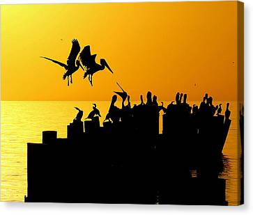 Landing In The Sunset Canvas Print by Sean Allen