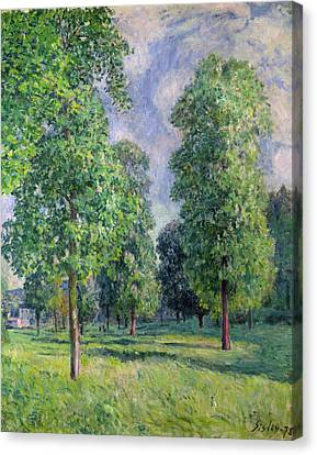 Landscape At Sevres Canvas Print by Alfred Sisley
